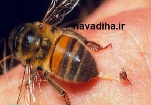 چگونه از شر حشرات در تابستان خلاص شویم؟