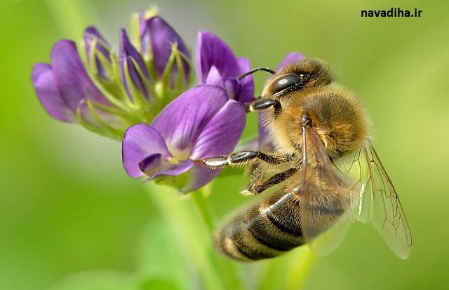 کلیپ اعجاز علمی در قرآن دنیای شگفت انگیز زنبور عسل