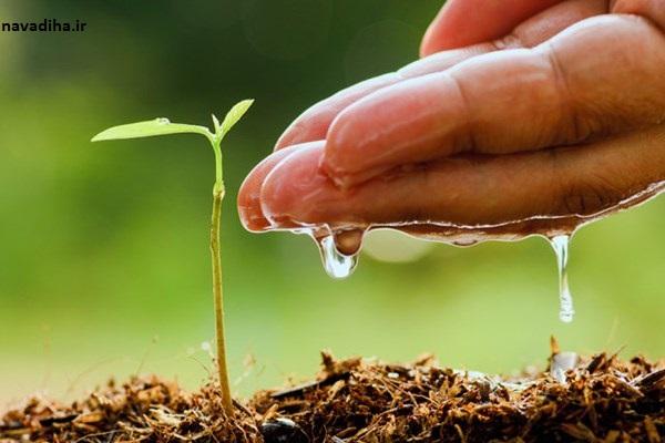 چگونه گیاهان را در هوای گرم زنده نگه داریم؟