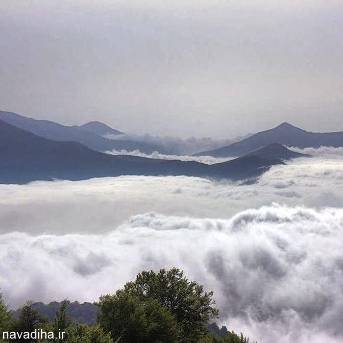 گلچین عکس از جنگل ابر شاهرود